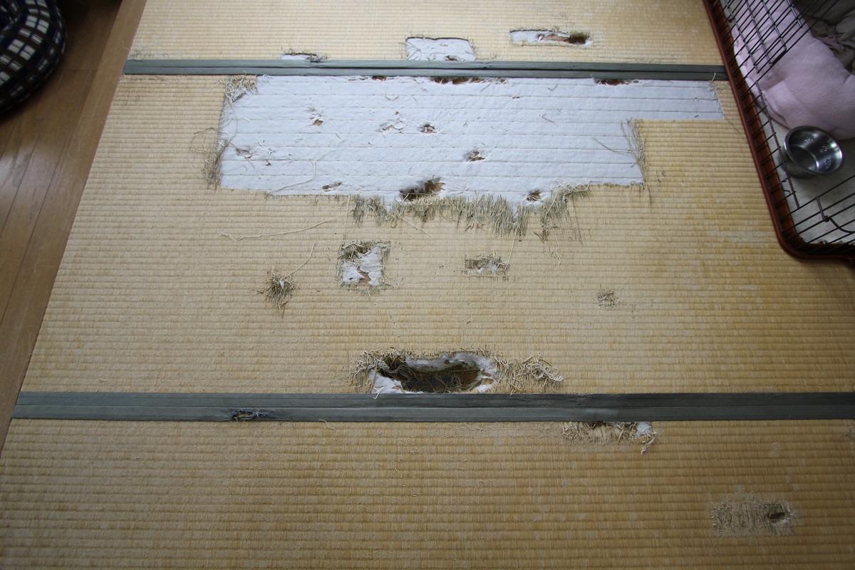 http://tatami-ya.net/entry-image/88e444e79bbc2cf701b63fb76f5fe6c35bbd91cf.jpeg