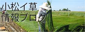 島内たたみ三代目ブログ